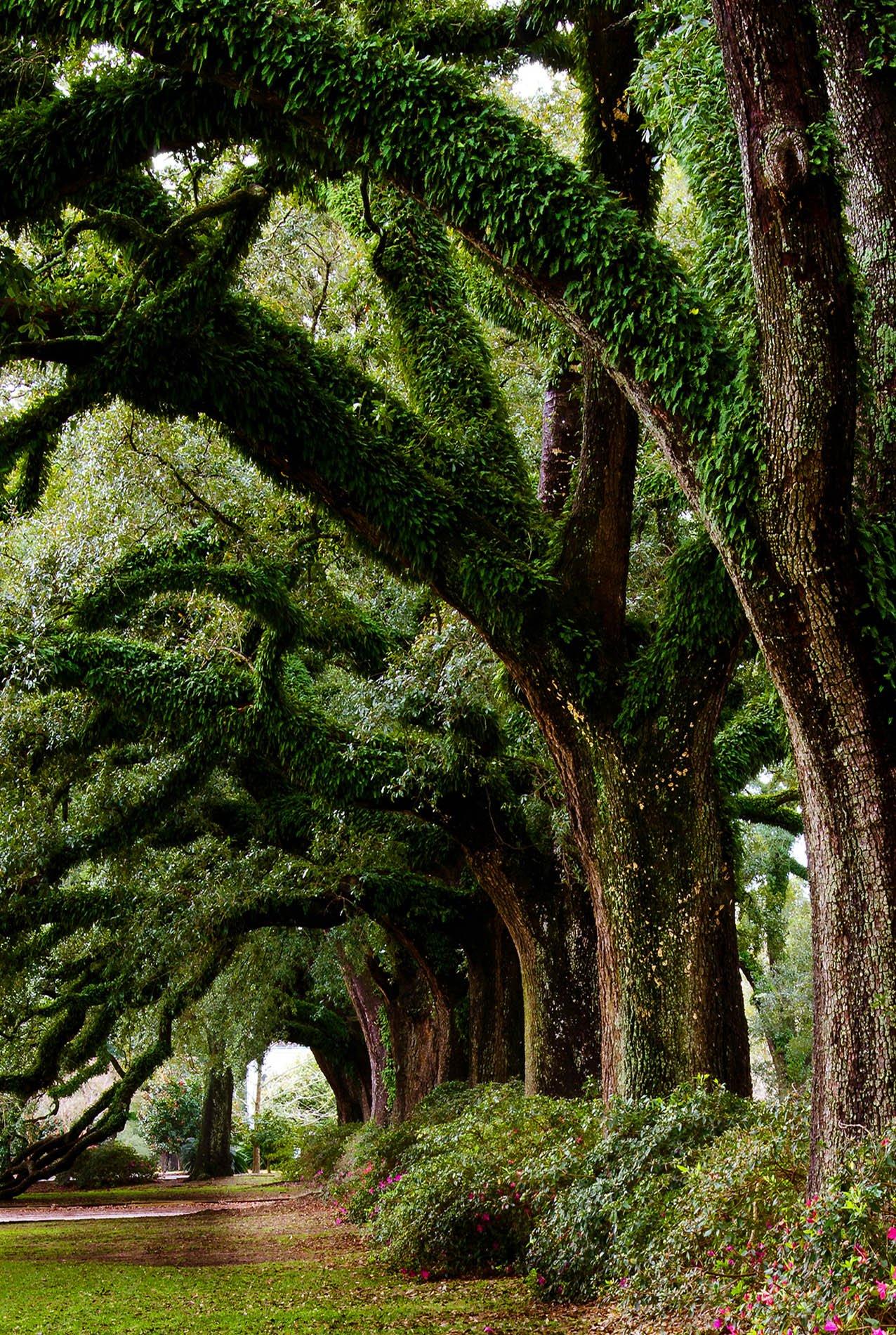 Japanese Garden Ideas Inspiration
